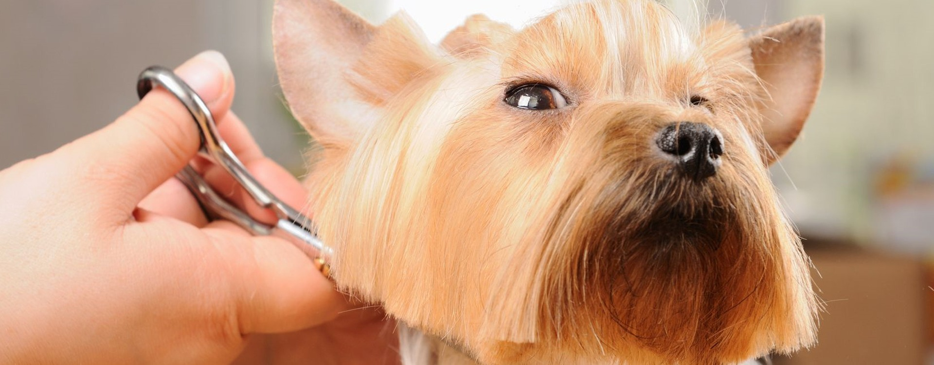 Dazzling Dogs Professional Dog Grooming